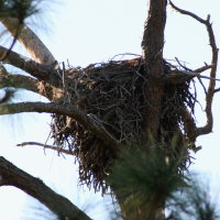 Eagle Nest at Anclote in Tarpon Springs Florida
