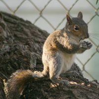 Squirrel in Port Richey Florida